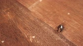 tentar : Ants are bringing dead insects back to the nest to eat.
