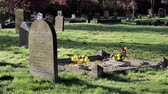 pedra tumular : Old Grave with fresh flowers - Ancient Rural Church Yard in Beautiful Morning Light - English Countryside Nature Walks Backgrounds Vídeos