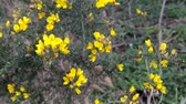 floral : Wild Yellow flowers in the wind