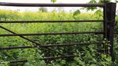 фехтование : Rapeseed field behind metal gate