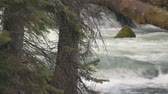 Footage of trees in front of Benham Falls outside Bend, OR. Stock Footage