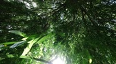 salgueiro : Looking upward through tree leaves in breeze of a weeping willow tree with the sun through the leaves Stock Footage