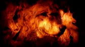 Wolf In Flames Abstract