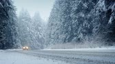 windy : Cars Drive Through Forest In Snowstorm