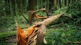 movimentar se : Fallen Trees After Stormy Weather