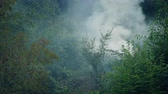 smoke : Thick Smoke Rising From Foliage