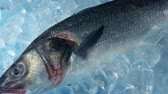 sgombro : Trophy Fish On Ice Filmati Stock