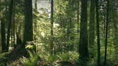 jib : Moving Down To Ground In Lush Summer Forest