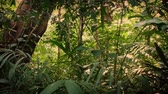 passar : Moving Through Dense Jungle At Sunset Stock Footage
