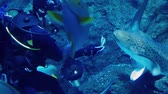 scuba dive : Diver In Aquarium Feeds Fish