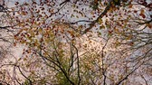 spacer : Under Autumn Trees In Many Colors