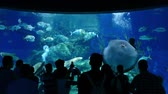 feeding fish aquarium : People At Aquarium Watching Fish And Stingray Stock Footage