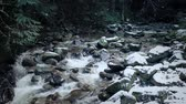 montanhas rochosas : Wild River With Snow Falling