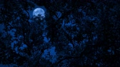 versteckt : Full Moon Behind Dense Tree Foliage