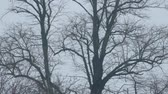 ramas : Tree Trunks Bare In Winter