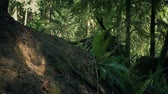 trilhas : Rising Up Slope In Sunny Forest Stock Footage