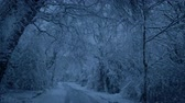 de neve : Snowing On Road Through Woods In The Evening