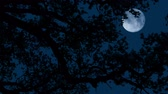 Moon Behind Tree Branches On Windy Night Stock Footage