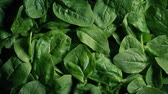 Pile Of Spinach Vegetable Rotating Stock Footage