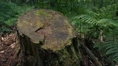 английский : Passing Stump Of Old Tree In The Woods