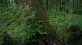Passing Ferns On Tree Stump In The Woods