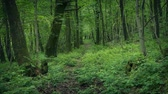 caminhos : Trail Through Scenic Woods Stock Footage