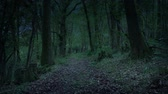 enrolamento : Creepy Path Through Woods At Dusk