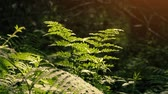 insetti : Ferns Lit Up Deep In The Woods