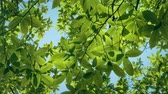 üzerinde : Leafy Branches And Blue Sky Overhead