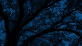 Tree Late At Night In The Breeze Stock Footage
