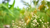 cabeludo : Dolly slide dry white small flower in nature place Stock Footage