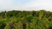 4K Drone shot aerial view scenic landscape of nature tropical forest Dostupné videozáznamy