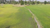 неустойчивый : Drone shot aerial view scenic landscape of vitage and old bamboo bridge in the fresh and nature rice field, The old contryside
