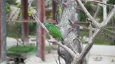 escarlate : Exotic motley parrot climbs on the branch of the tree in tropical garden, asian birds, fauna of the jungle Vídeos