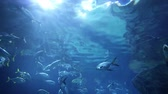 wrack : School of fishes underwater
