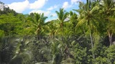 stunning view : Aerial shot with dron of amazing Bali jungle rainforest landscape view from above with palm trees and tropical plants under a blue sky in travel holidays and Asia beautiful destination concept Stock Footage