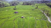 indonesia : Lateral bread aerial shot above stunning Bali rice terraces and palm trees rainforest landscape view from above in exotic travel holidays and Asia beautiful destination concept Stock Footage