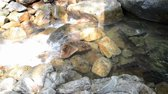 trough : Brook Carps in the stream of the waterfall Stock Footage