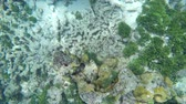 aquarium : Tropical fish swim around a barrel sponge on a coral reef