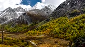 forest : Yading national level reserve, Daocheng, Sichuan Province, China. Stock Footage