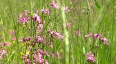 flower growing sun : tall meadow grass and pink flowers - detail Stock Footage