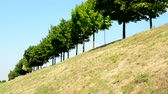 inclinado : view of the trees in the line in the countryside - grassland