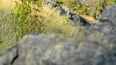 view of the rocks in the beautiful grassland - detail of the edge of rocks
