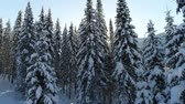 very low : snow-covered fir forest