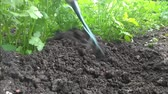 soupis : manual rake bed with parsley loosens and bores