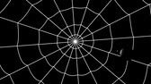 horror : concentric cobwebs on a black background, spider crawling towards the center Stock Footage
