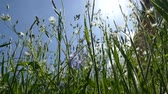 pasturage : Lush grass and weeds. Food for animals. Stock Footage