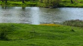 prado : Spring in the middle of nature. Riverside. Flowering wild yellow flowers. Stock Footage