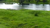 Spring landscape. Fullwater River. Amazing green grass, on the river bank.