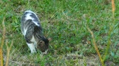 prendedor : Cat looks for mice. Training hunting skills.